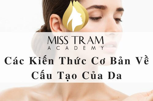 Basic Knowledge of Skin Structure 1