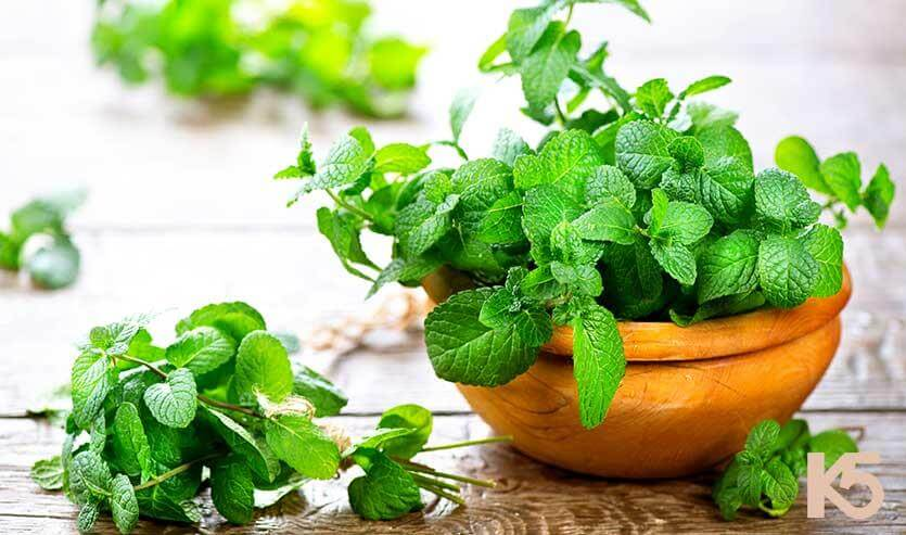 Uses of peppermint leaves for the skin