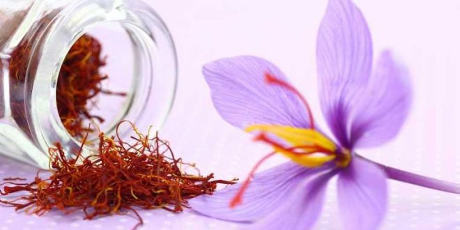 Saffron - Natural Beauty Ingredients Spas Need 1