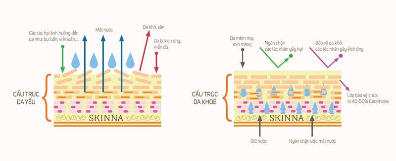 Cấu trúc làn da