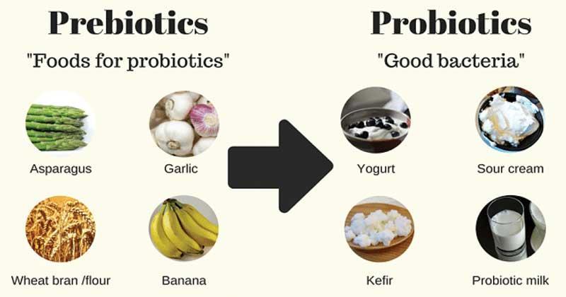 Thực phẩm giàu Prebiotic và Probiotic