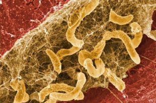 Hệ thống vi sinh trên da